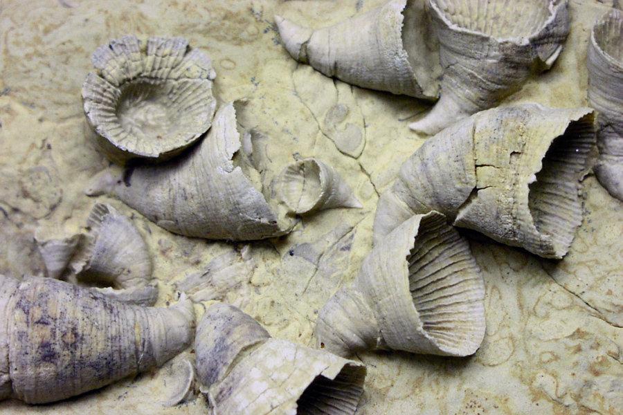 造礁生物消失,竹节石类,腕足动物的3个目,四射珊瑚10多个科灭亡,被称