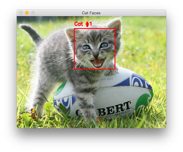 Figure 2: A second example of detecting a cat in an image with OpenCV, this time the cat face is slightly different.